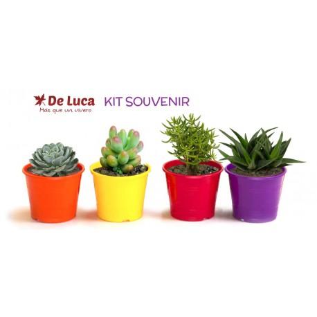 Kit Souvenir Suculentas
