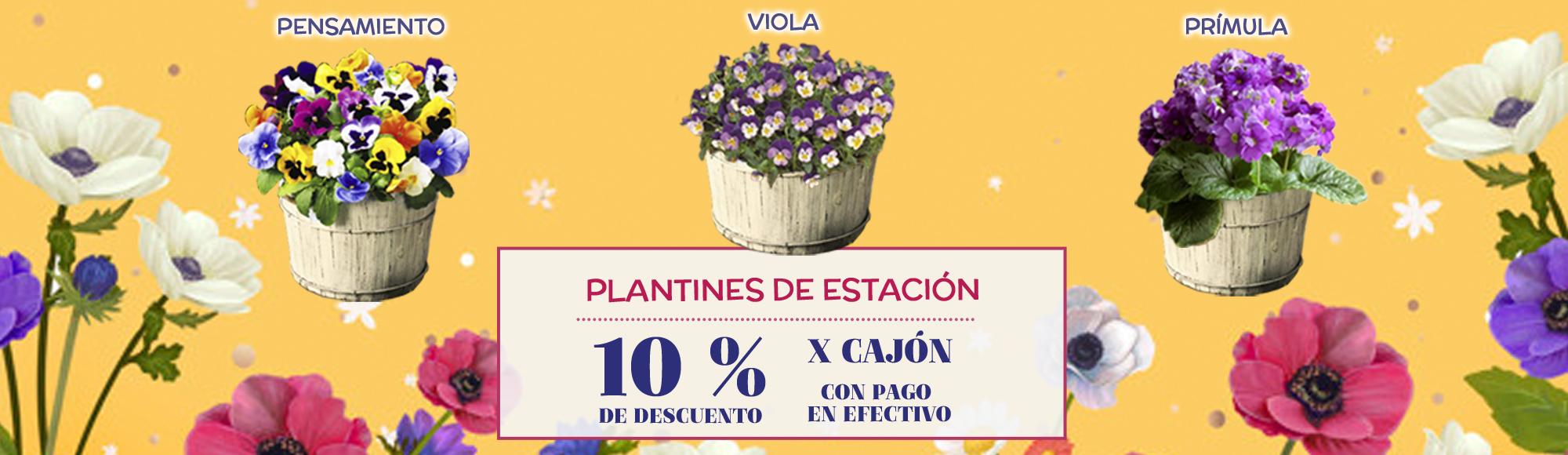 10% OFF x cajón de Plantines de Estación